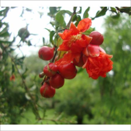 Fruit Farming Services