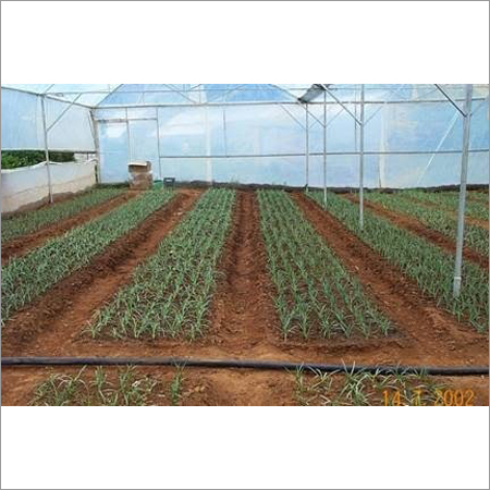 Vegetables Farming Services