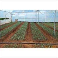 Vegetables Farming Services