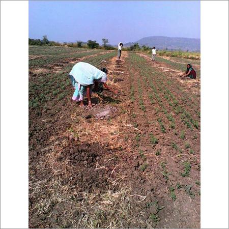 Plantation Advisory Services