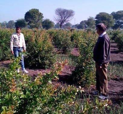 Customized Contract Farming
