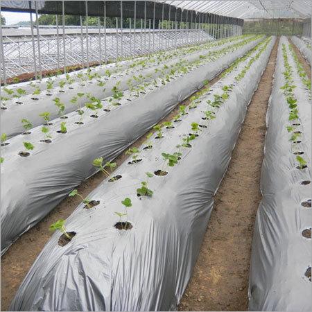 Agricultural Mulch Film