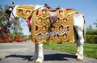 Stylish Horse Decoration Costume