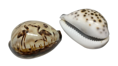 Sea Shell Tableweight Gifts