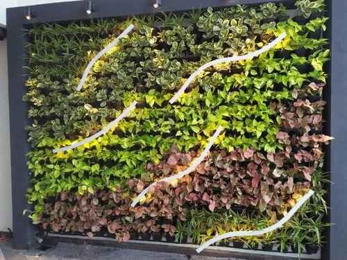 Vertical Indoor Gardening