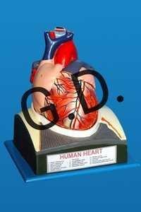 Heart Jumbo