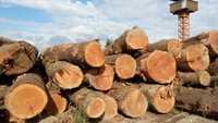 SPF Spruce Pine Fir