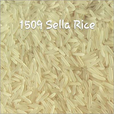1509 Sella Rice