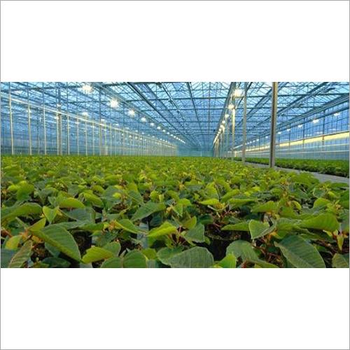 UV Resistant Poly Greenhouse