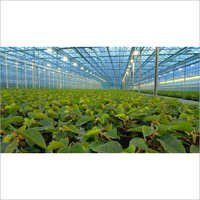 UV Resistant Poly Greenhouse