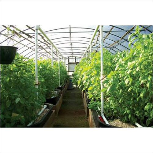 Agriculture Poly Greenhouse