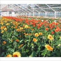 Garden Poly Greenhouse