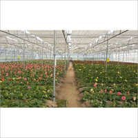 Nursery Poly Greenhouse