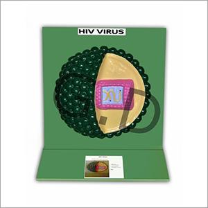 HIV Virus Model