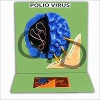 Polio Virus Model