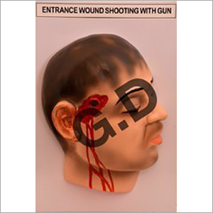 Forensic Model Entrance Wound With Gun