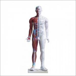 Human Body Models