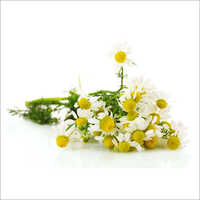 Chamomile Blue Floral Water