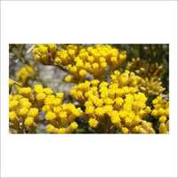 Helichrysum Floral Water