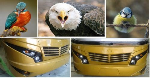 Luxury Bus G-sharp