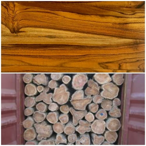 Togo Teak Wood Togo Teak Wood Importer Manufacturer