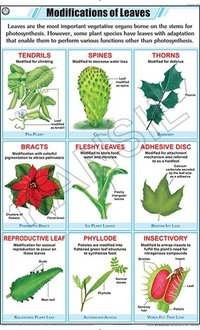 Leaf Modification Chart