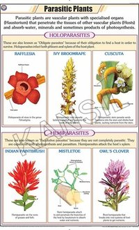 Parasitic Plants Chart