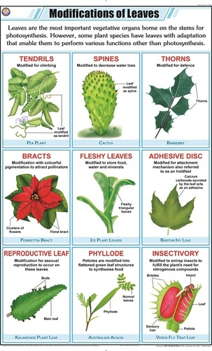 Leaf Modification Chart