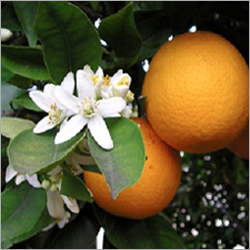 Citrus Air Freshener Refill