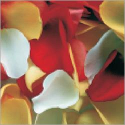 Tea Rose Air Freshener Refills