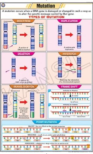 Mutation Chart