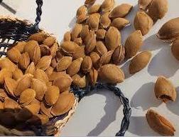 Bitter Apricot Kernel