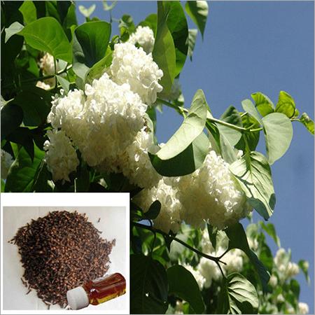 Natural Clove Essential Oil