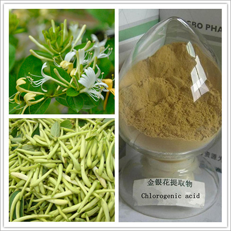 Honeysuckle Flowers Extract