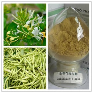 High quality honeysuckle flowers extract