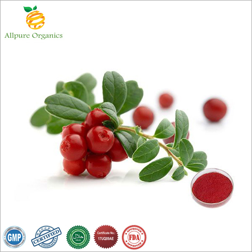 Cranberry Extract Powder