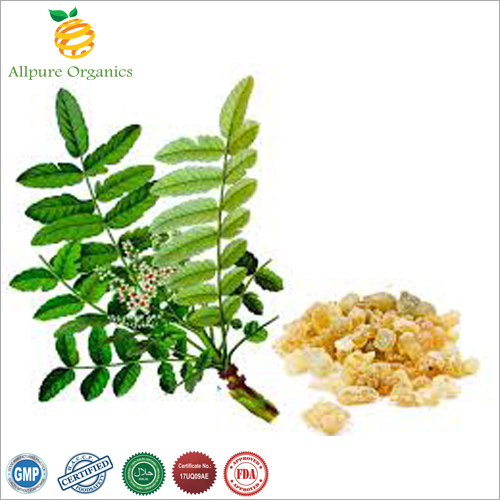 Boswellia Extract Powder, Boswellia serrata
