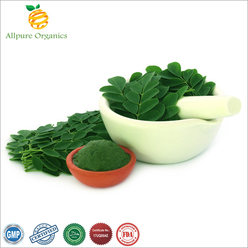 Moringa Leaf Extract Powder