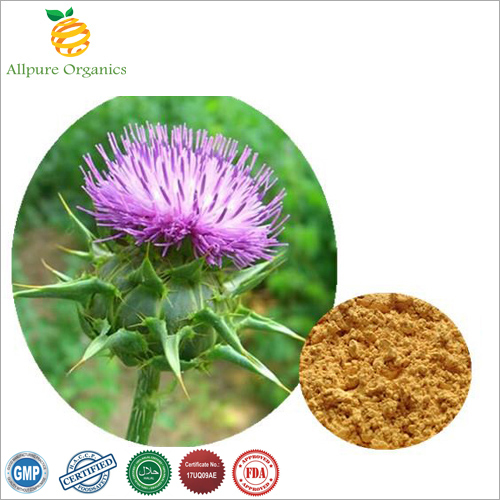 Silymarin Extract Powder
