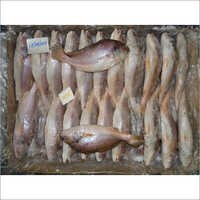 Frozen Croakers Fish