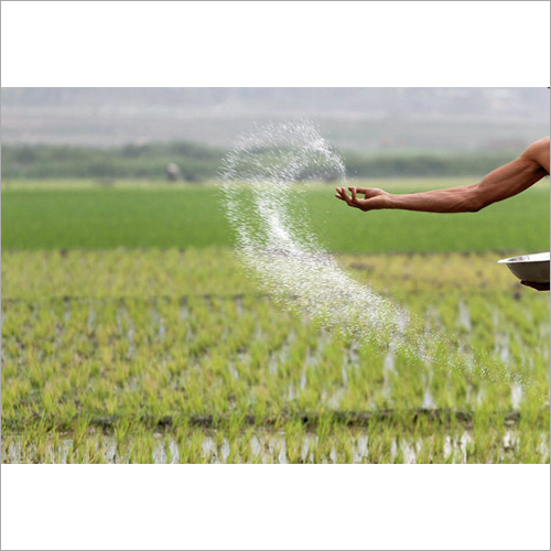 Paddy Seeds Fertilizer