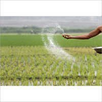 Paddy Seeds Fertilizer