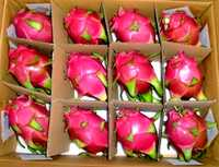 DRAGON FRUIT  VIETNAM