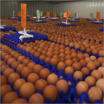 Chicken Eggs Packaging