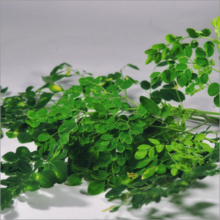 Herbal Leaves