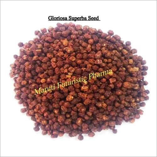Gloriosa Superba Seeds