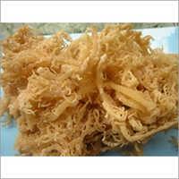 Eucheuma Cottonii
