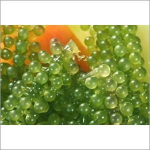 Sea Grapes