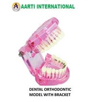 Dental Orthodontic Model