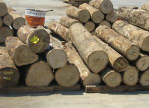 Gmelina Wood